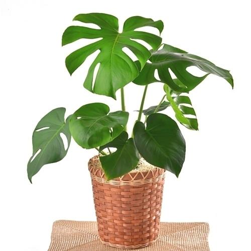 관엽식물은 크기 및 종류가 다양합니다.