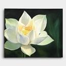 한송이의 하얀 연꽃을 표현한 연꽃 그림