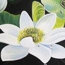 연꽃 그림 4 (40X80CM)