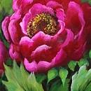 모란꽃 그림 21